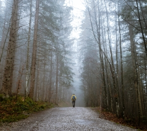 person walks on dirt path in misty forest
